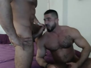 muscle Muscle Studs Fuck On Webcam studs