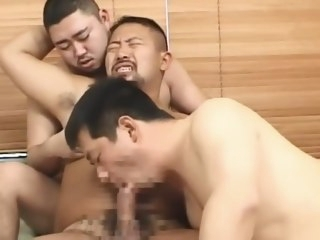 jap Jap bear threesome bear